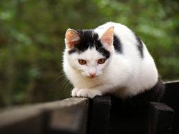 cats4adb40ec7ca85