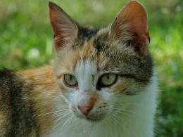 cats4adb42cd8f6f4