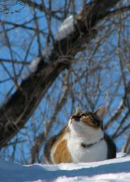 KittyBling