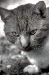 Catttt