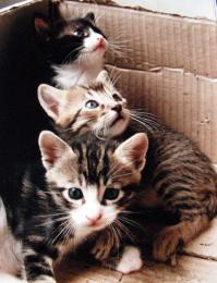 Threelittlecats
