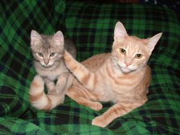 cats4addd941942a8