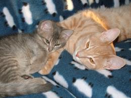 cats4addd97b4525c