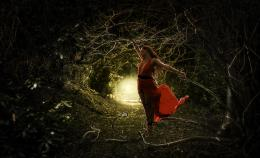 Tangled In The Forest