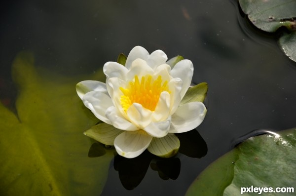 Fiore sullacqua