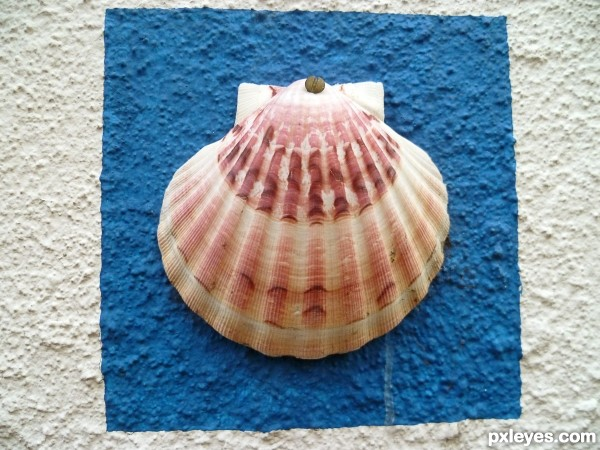 Shell on a wall