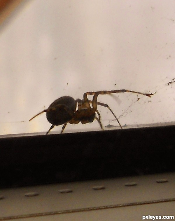 ahhh spider!!