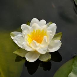 Fiore sull