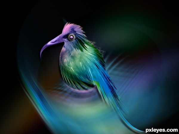 Sweet Bird photoshop picture)