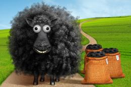 Baabaa Black Sheep Picture