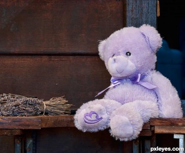 Lavender Teddy