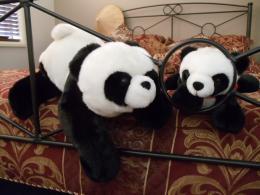 Playfulpandas