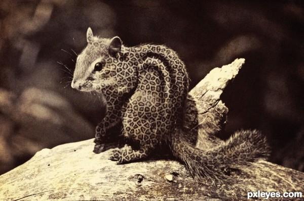Leopard or Chipmunk ?