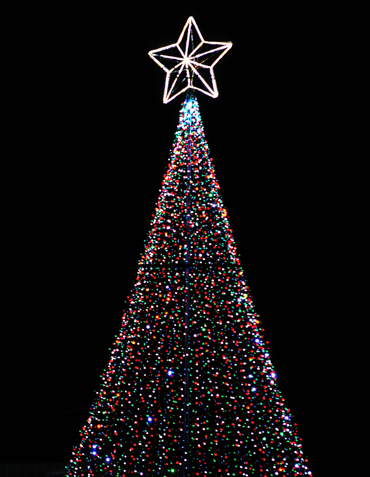 Christmas Tree Pictures High Resolution : Christmas trees photography contest pictures page