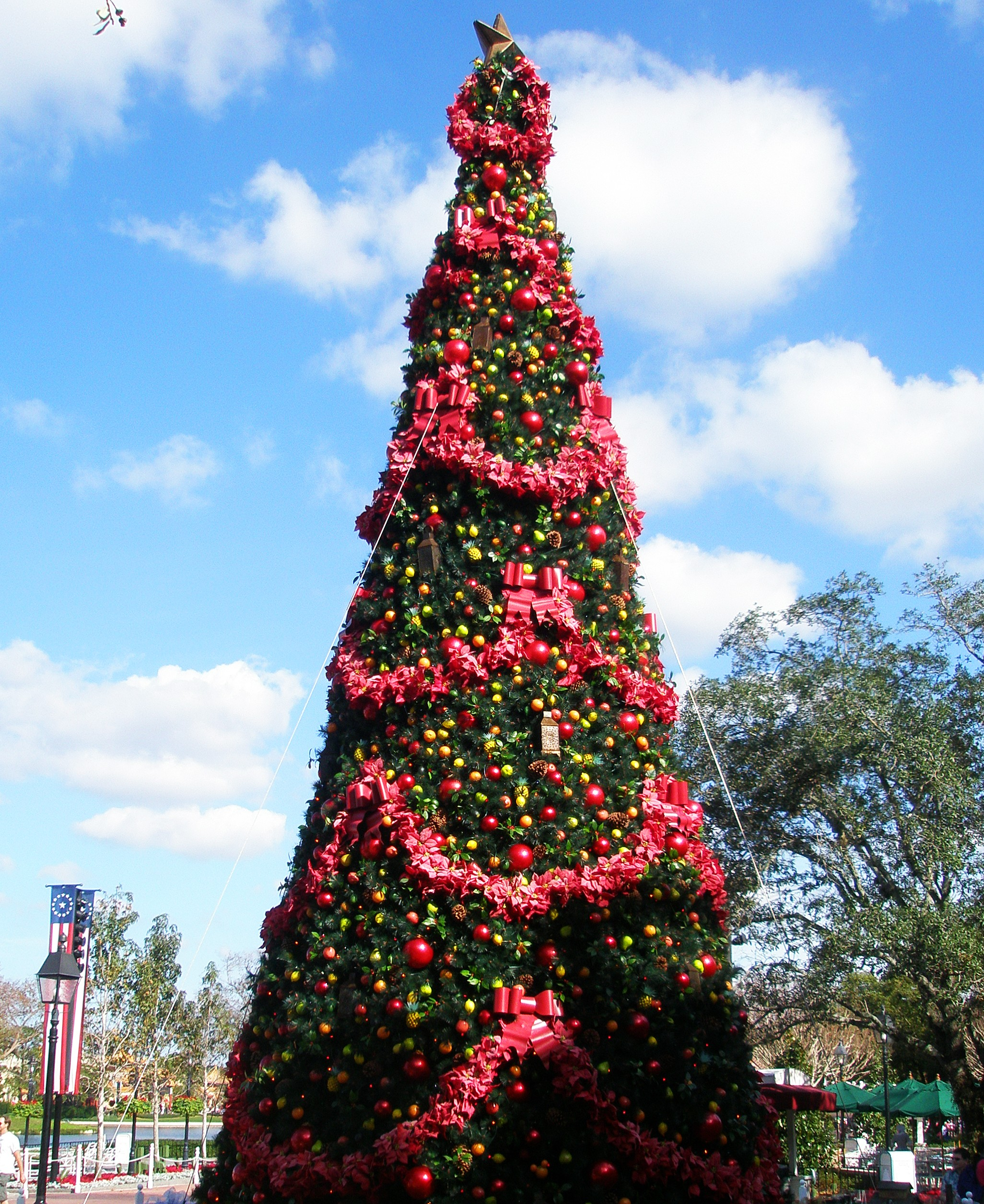 Large Christmas Tree: Big Christmas Tree Picture, By Ory For: Christmas Trees