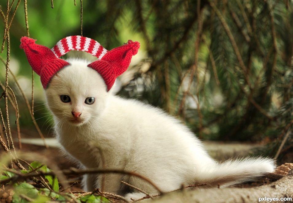 Kitten with Earmuffs