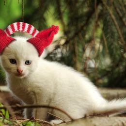 KittenwithEarmuffs