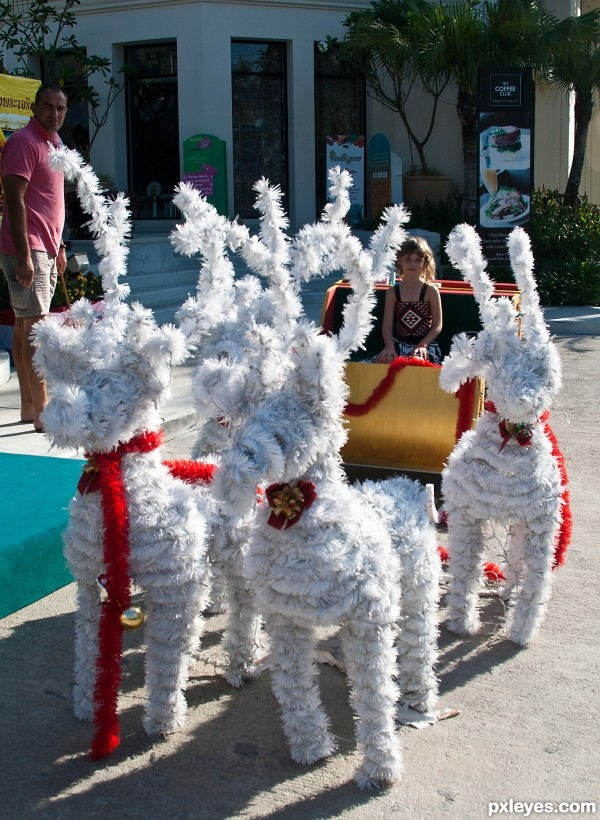 hate Reindeers in the Tropics