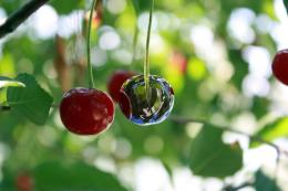 Chromecherry