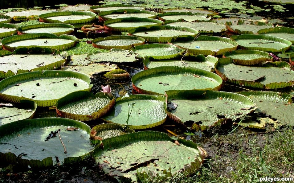 Circles in Wetland
