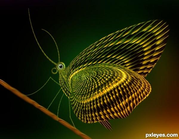Cutebutterfly
