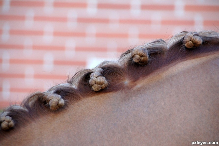 Horses  hairstyle