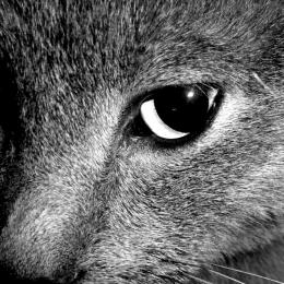croppedcat