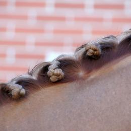 Horseshairstyle