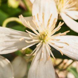 Springtentacles