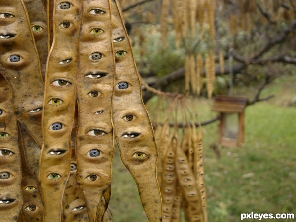 Eye Pods