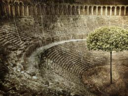 The Tree Of Colosseo