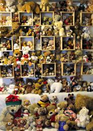 245 bears