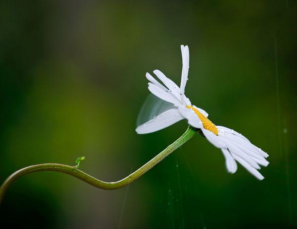 rain dropplet on flower