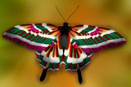 Colorfulbutterfly