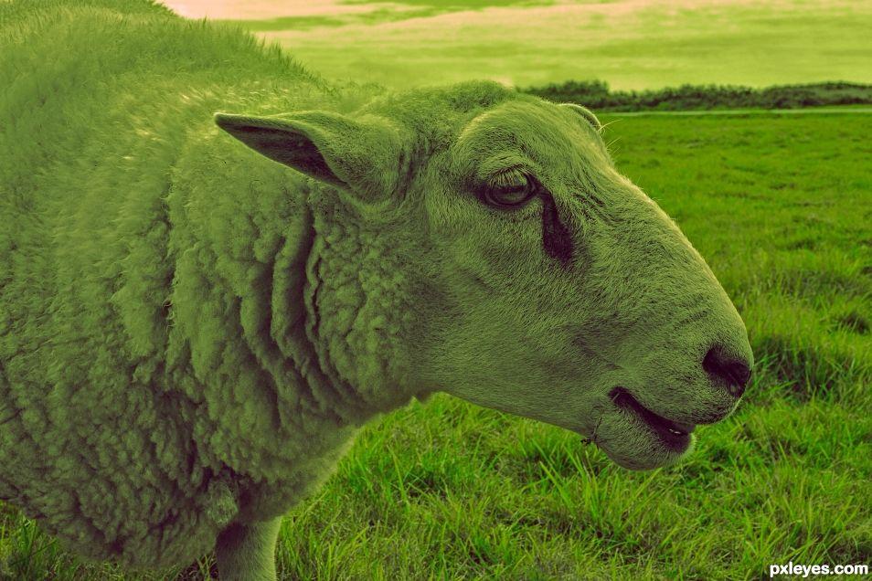 Bee bee green sheep