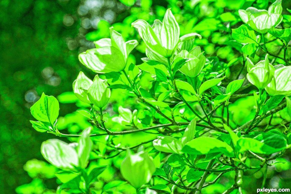 Sprintime green