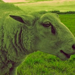 Beebeegreensheep