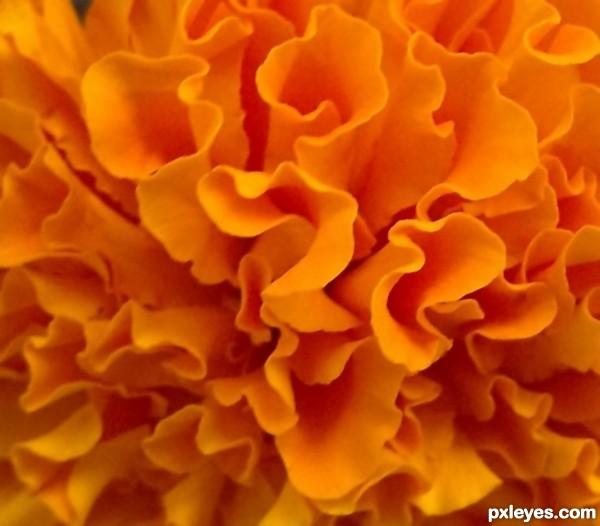 Orange Shades orange! picture,khan.pakeezah for: color shades photography