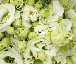 Greenroses