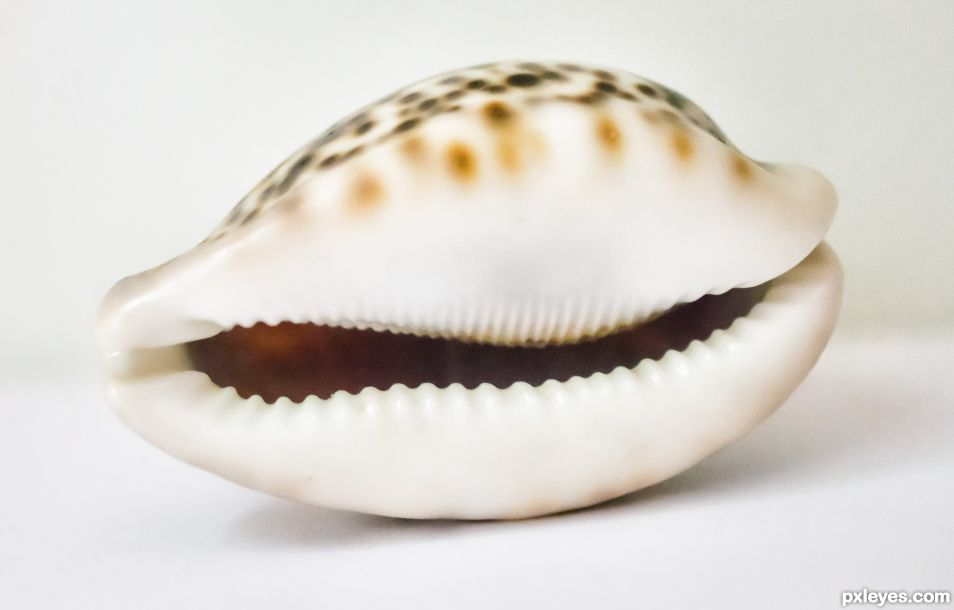 Cowrie smile