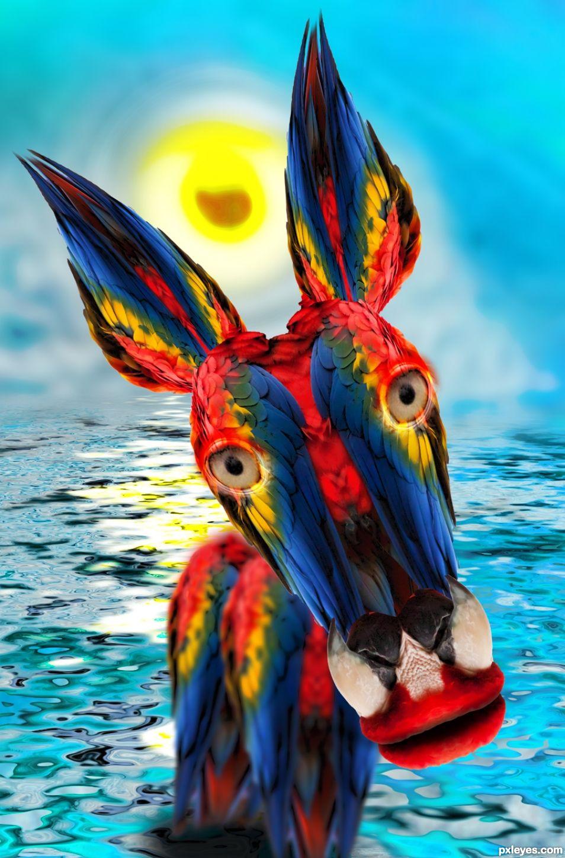Colorful Parot Photoshop Contest (21929), Pictures Page 1 - Pxleyes.com