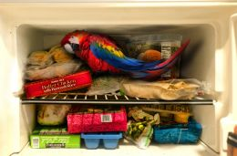 BAR JOKE: Parrot in the Freezer