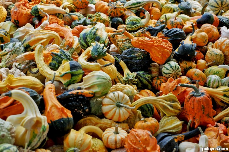 Local Gourds