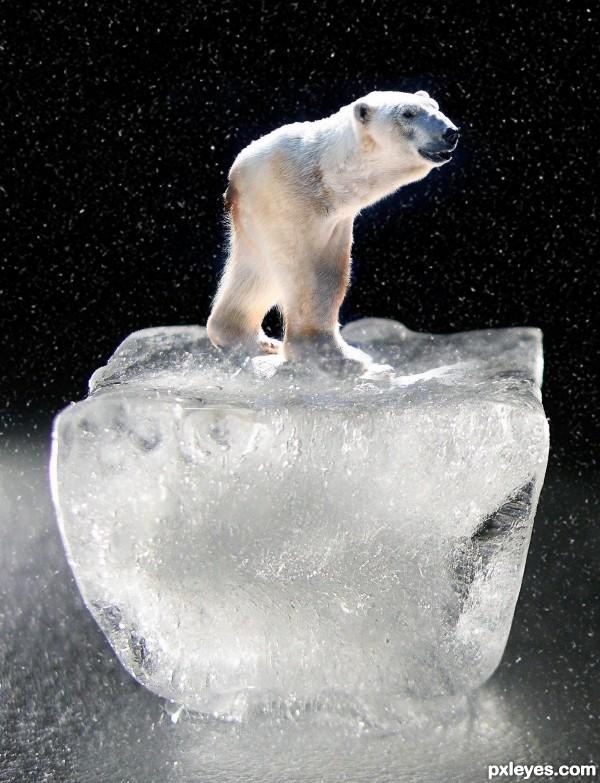 Dwarf Polar Bear