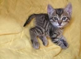 Mini Kittens For Sale