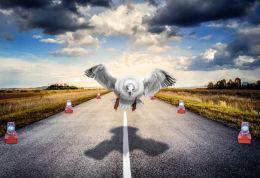 Stocky Seagull