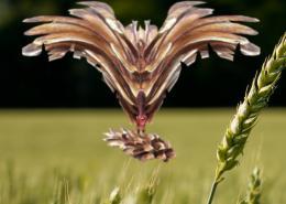 Birdofprey