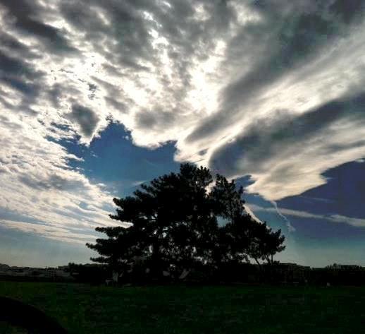 Sky, Tree