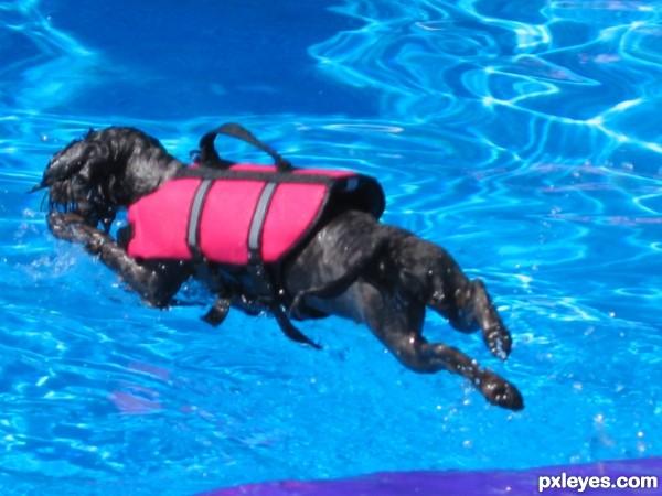 Aqua Pup