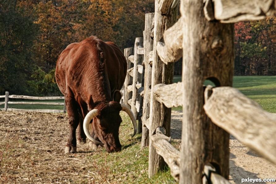 Autumn Bull